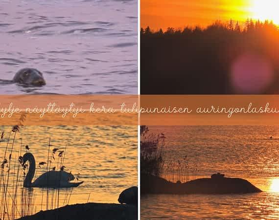 Hylje näyttäytyi kera tulipunaisen auringonlaskun