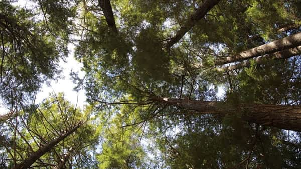 Saaren taika istuttaa puita vastuullisuus